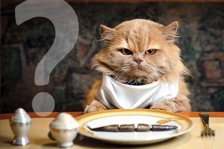 Curiosidades sobre a gastronomia.